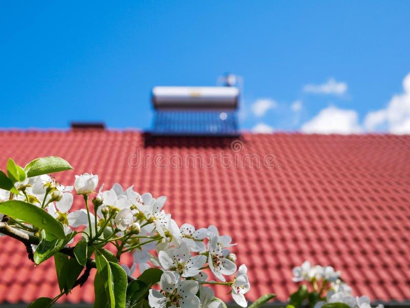 Rama de peral de florecimiento en el foco, caldera solar del calentador de agua en tejado en fondo fotografía de archivo libre de regalías