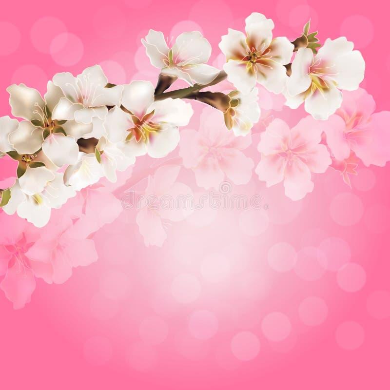 Rama de Sakura en un fondo rosado ilustración del vector