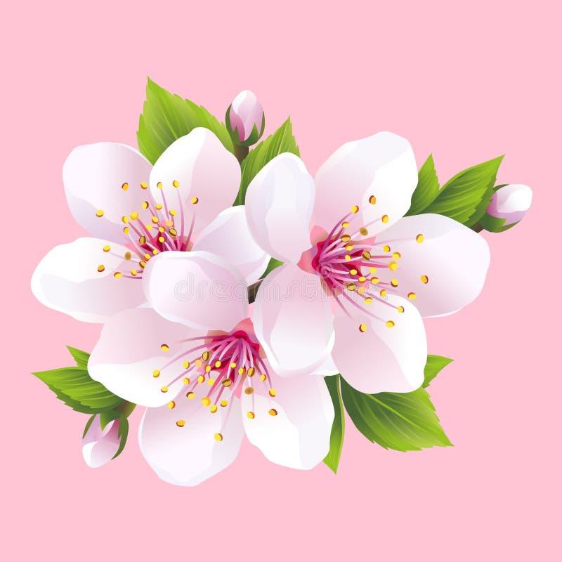 Rama de Sakura floreciente blanco - cerezo japonés ilustración del vector