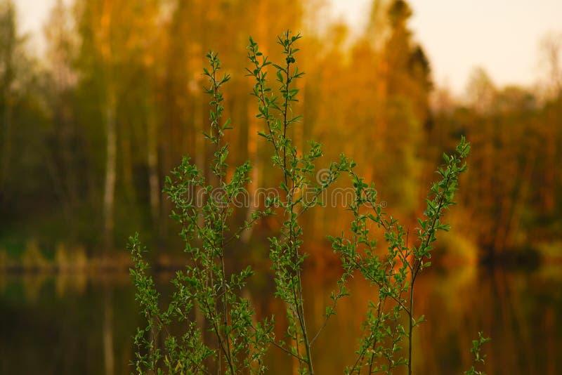 Rama de un árbol joven en un verano borroso del bosque del fondo imagen de archivo