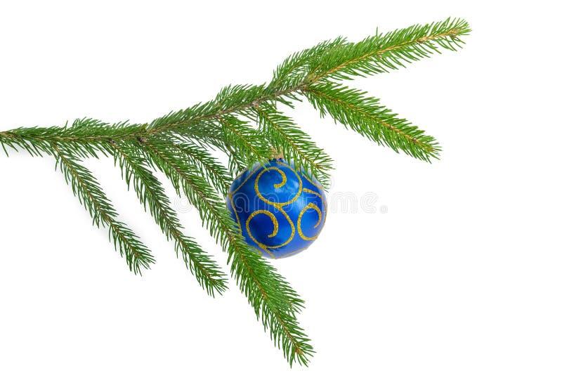 Rama de vida de la picea con el ornamento azul de la Navidad en el backg blanco imágenes de archivo libres de regalías