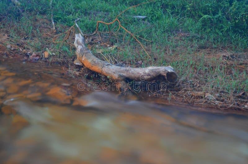Rama del árbol con una corriente del agua fotografía de archivo