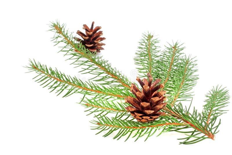 Rama del árbol de navidad con el cono fotos de archivo
