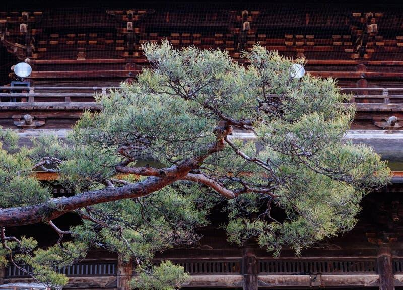 Rama del árbol de pino con la casa de madera imagenes de archivo