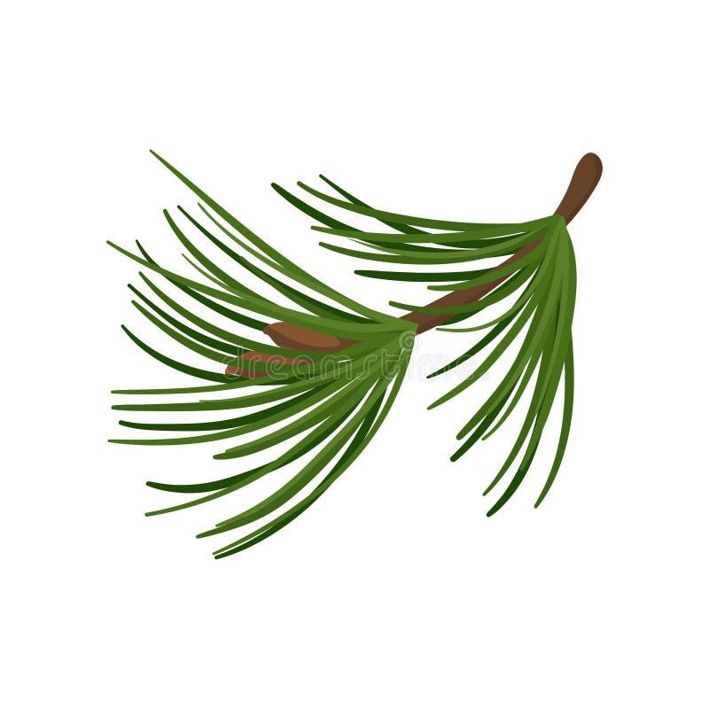 Rama del árbol de pino con las agujas verdes largas Ramita conífera Planta tradicional de la Navidad Icono plano del vector ilustración del vector