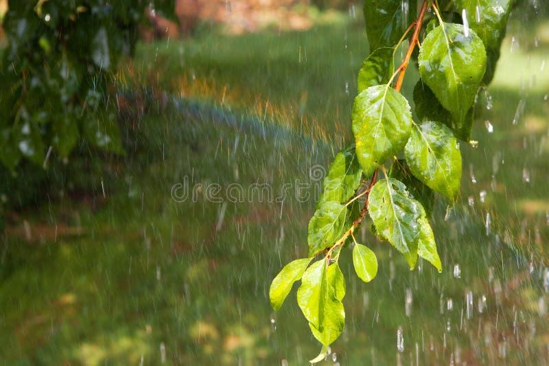 Rama del árbol debajo de la lluvia imagen de archivo