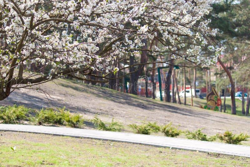 Rama del árbol del flor en el parque Resorte temprano fotografía de archivo libre de regalías