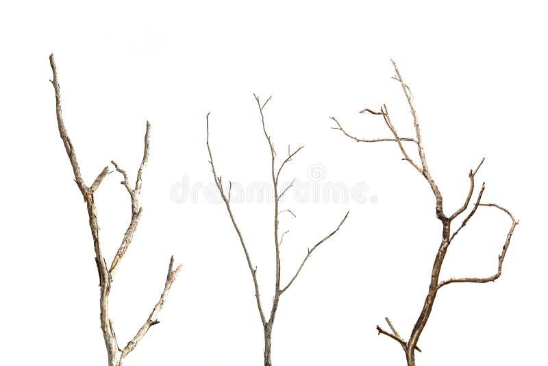 Rama del árbol muerto sin la hoja aislada en blanco fotos de archivo