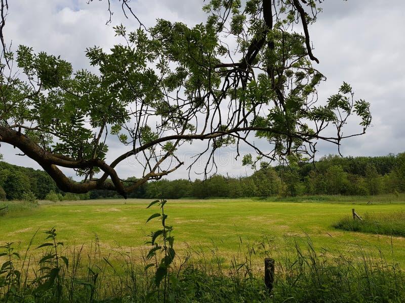 Rama del árbol que crece de lado sobre campo y prado foto de archivo