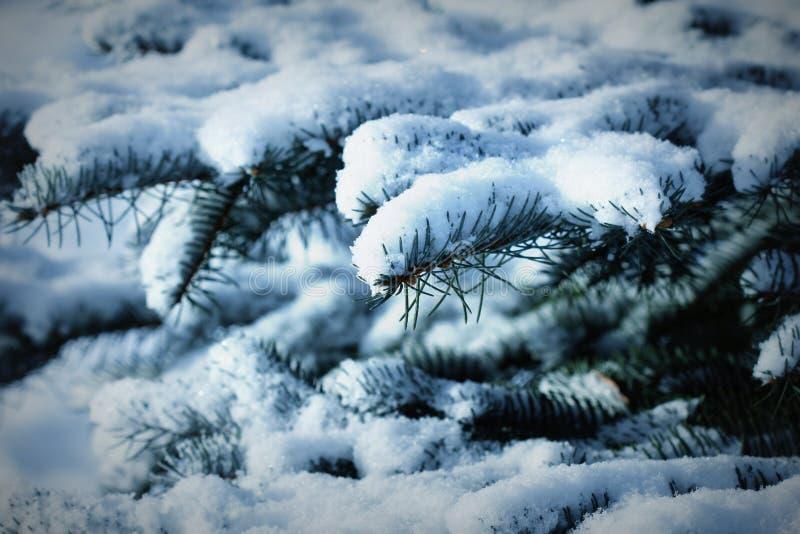 Rama del abeto cubierta pesadamente con nieve fresca en bosque fotos de archivo