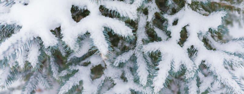 Rama del abeto cubierta pesadamente con nieve fresca en fondo blanco puro fotografía de archivo libre de regalías