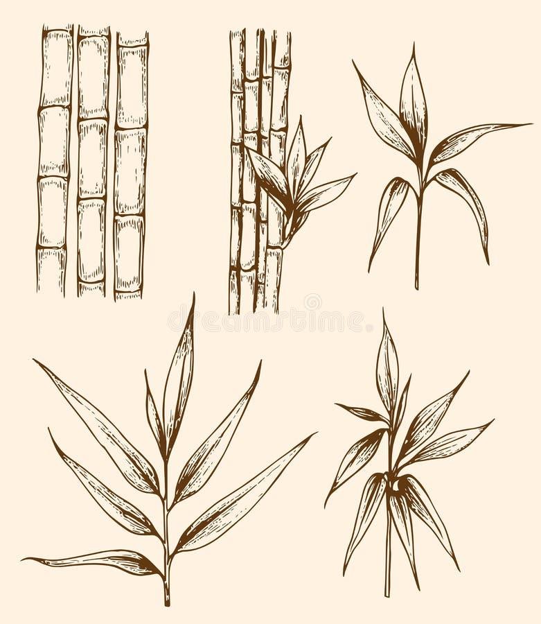 Rama del bambú del vintage libre illustration