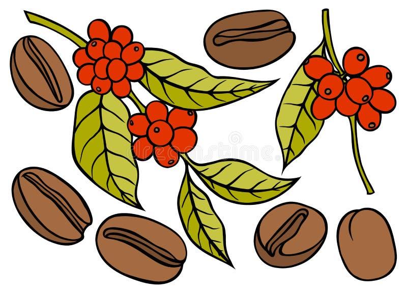 Rama del café con la hoja y la baya ilustración del vector