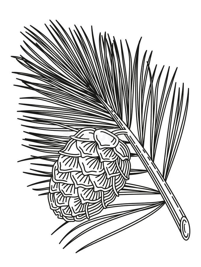 Rama del cedro con el cono stock de ilustración