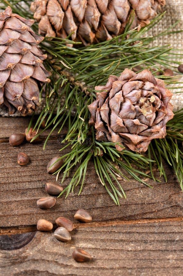 Rama del cedro con los conos en fondo de madera imagenes de archivo