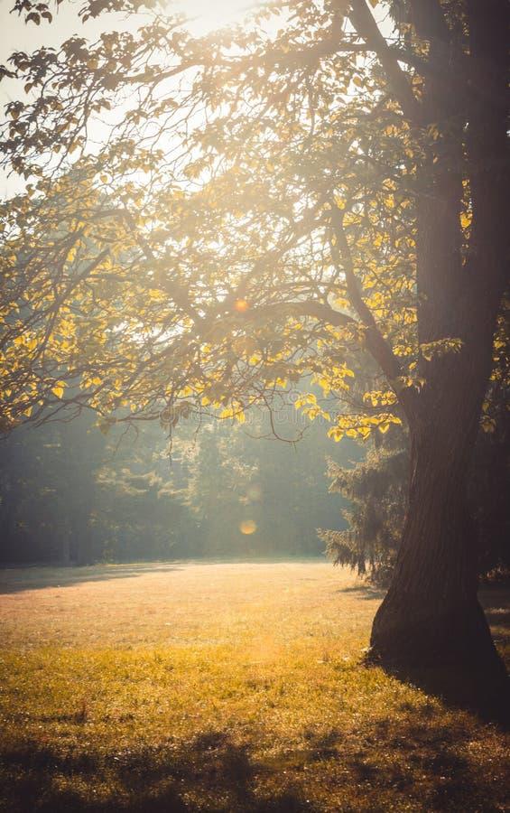 Rama del claro de un árbol con luz del sol de las hojas imagen de archivo