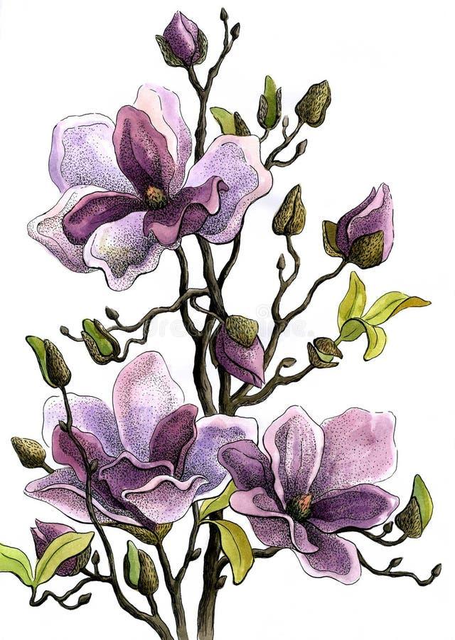 Rama del dibujo de una magnolia floreciente Papel, color de agua, manija del helio libre illustration