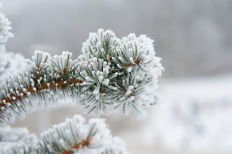 rama del Piel-árbol en el frío foto de archivo