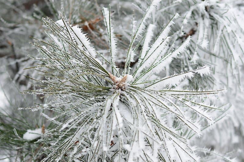 rama del Piel-árbol en el frío fotos de archivo
