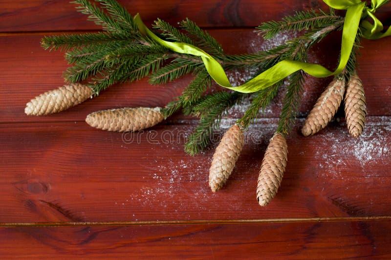 Rama del pino con la cinta torcida conos del gree foto de archivo libre de regalías
