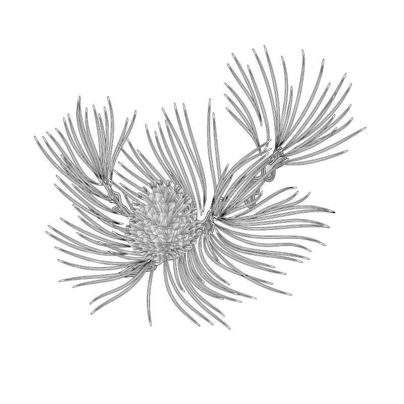 Rama del pino con vector del vintage del grabado del cono del pino libre illustration