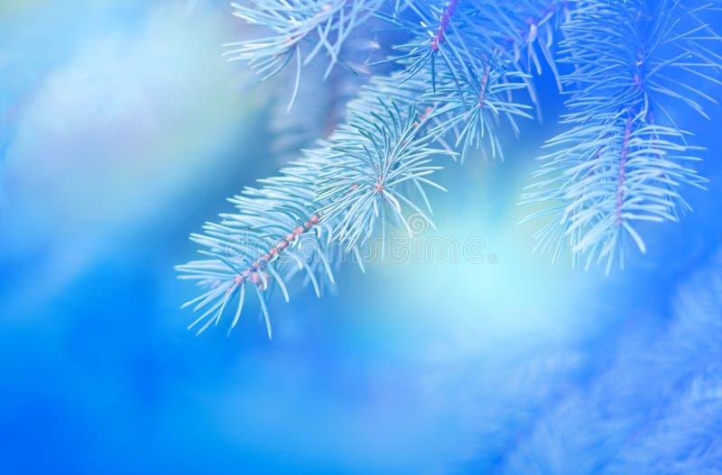 Rama del pino en un fondo azul borroso con el primer de las sombras fotos de archivo