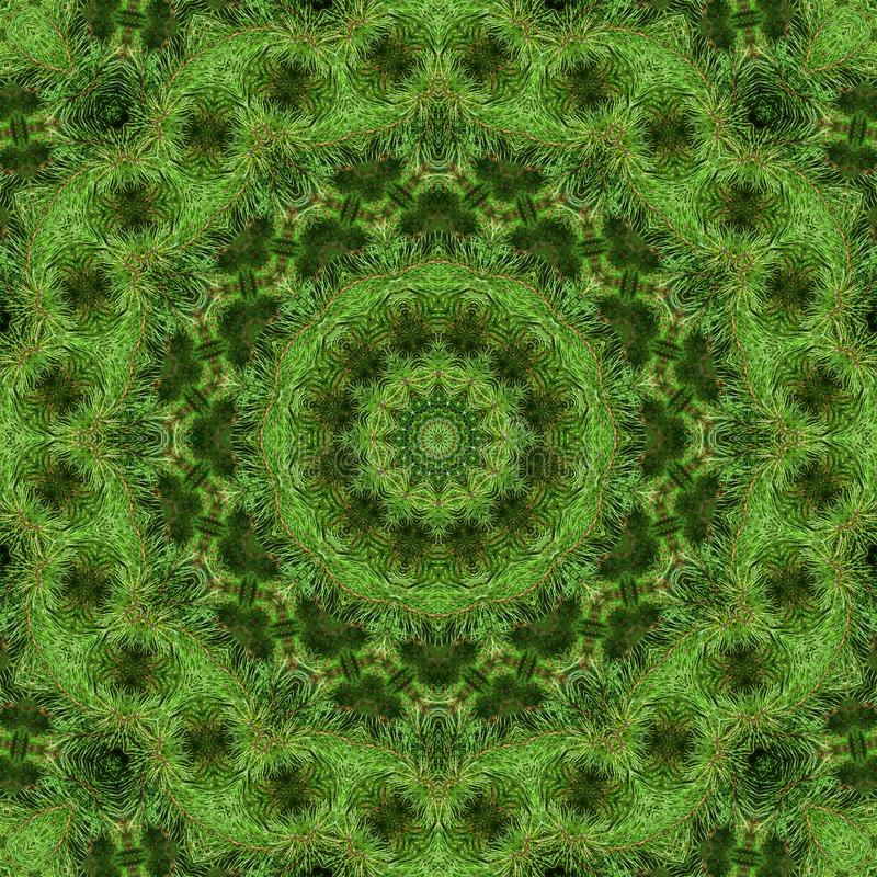 Rama del pino mullido verde stock de ilustración