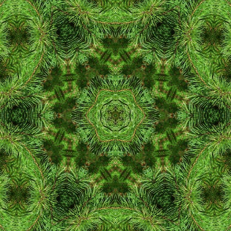 Rama del pino mullido verde ilustración del vector
