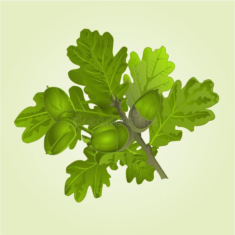 Rama del roble con el ejemplo natural del vector del fondo del verano de las bellotas y de las hojas editable libre illustration