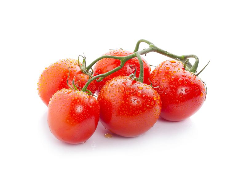 Rama del tomate con las gotitas de agua aisladas en el fondo blanco fotos de archivo libres de regalías