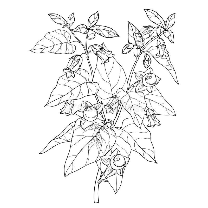 Rama del vector de la belladona del Atropa del esquema o del manojo tóxica de la flor del nightshade mortal, baya y hoja en negro libre illustration