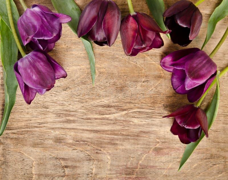 Rama dla fotografii od świeżych fiołkowych tulipanów obrazy royalty free