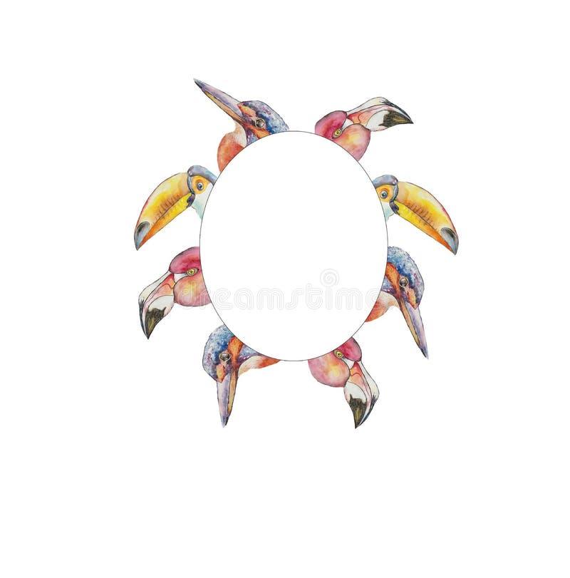 rama egzotyczni ptaka pieprzojada flamingi i zimorodek ilustracja wektor
