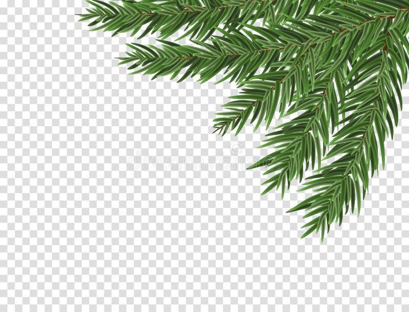 Rama enorme verde de la picea o del pino Rama de árbol de abeto aislada en el elemento blanco de la Navidad del vector stock de ilustración