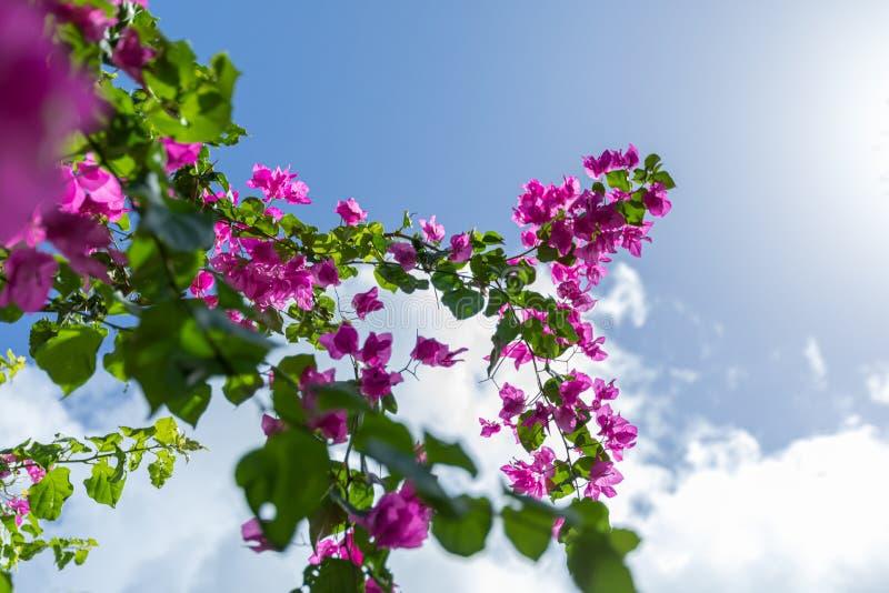 Rama floreciente de flores delante del cielo brillante fotografía de archivo