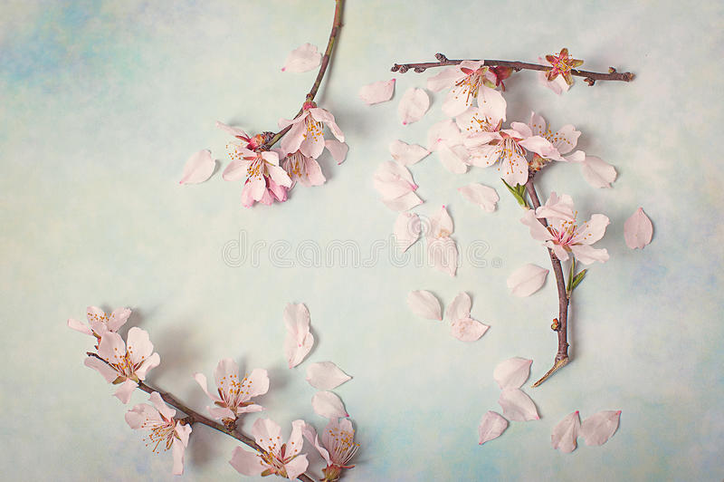 Rama floreciente de la primavera en fondo abstracto Flores de la almendra imagen de archivo libre de regalías