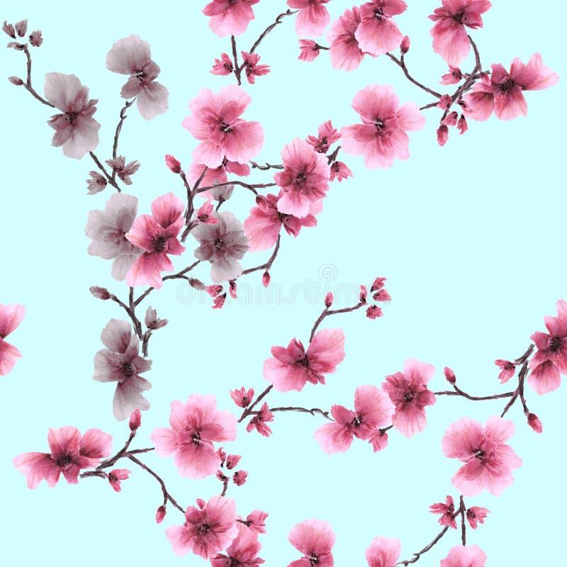 Rama floreciente rosada del ciruelo del modelo inconsútil de la acuarela en un fondo de la turquesa ilustración del vector