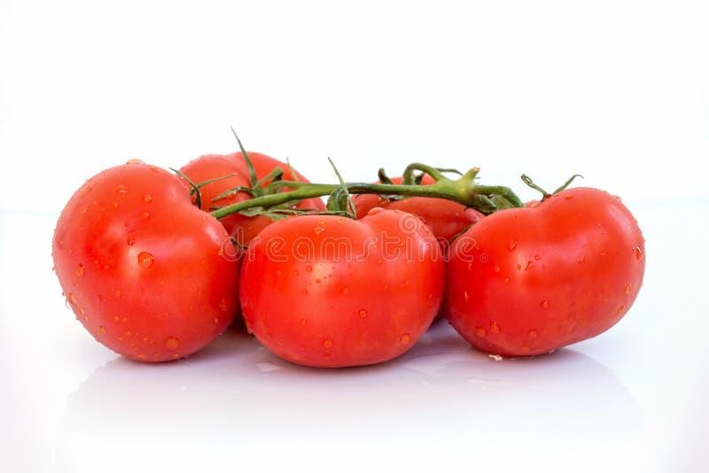 Rama fresca de tomates con las gotitas de agua, fondo blanco fotos de archivo libres de regalías