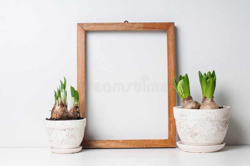 Rama i rośliny fotografia stock