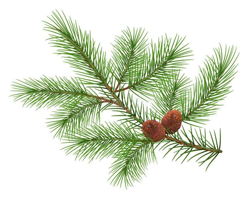 Rama mullida verde del cedro y dos conos libre illustration