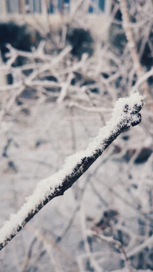 Rama nevada congelada en invierno foto de archivo
