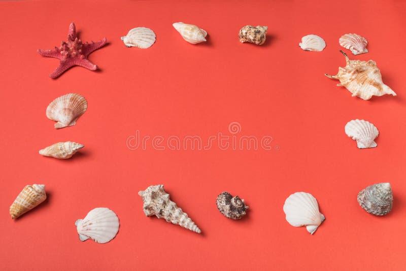 Rama od rozmaitości seashells na tle żywy koral Mieszkanie nieatutowy Morski poj?cie obraz royalty free