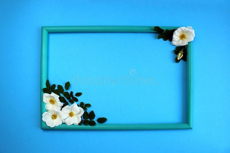 Rama, peonia, kwiat, pączek, biel zielony, piękny, liść, kwiat, płatek, dekoracja, projekt, miejsce dla inskrypcji, tekst, zieleń obraz stock