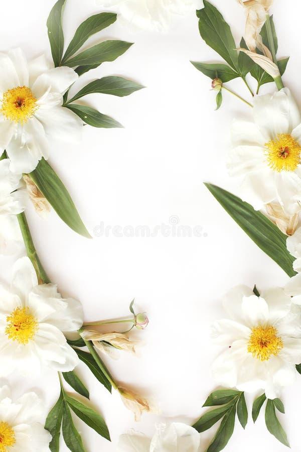 Rama robić białe peonie, duzi liście odizolowywający na whit irys obraz royalty free