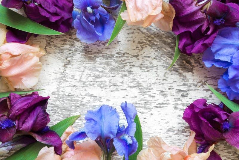 Rama robić kolorowy irys kwitnie na białym nieociosanym drewnianym tle dla kreatywnie pracy projekta Odgórny widok zdjęcie royalty free