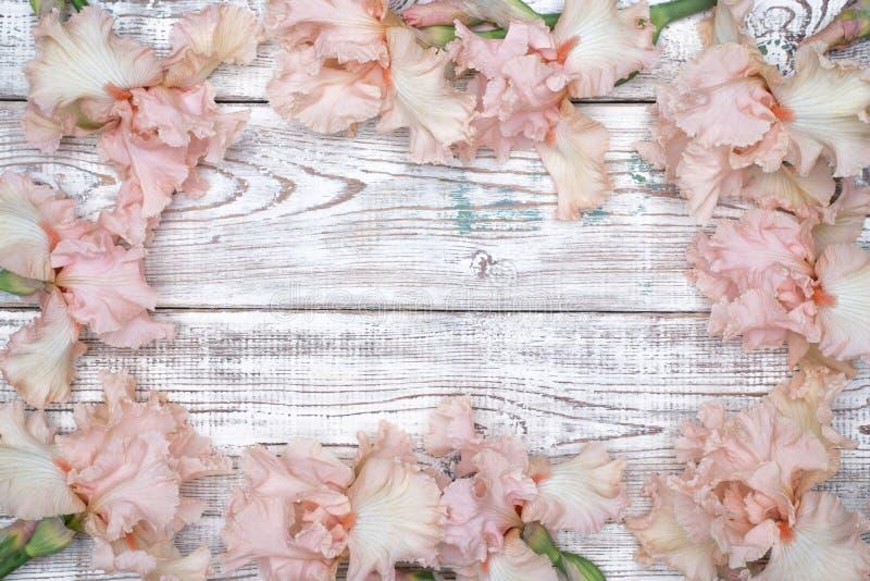 Rama robić różowy irys kwitnie na bielu stole fotografia stock