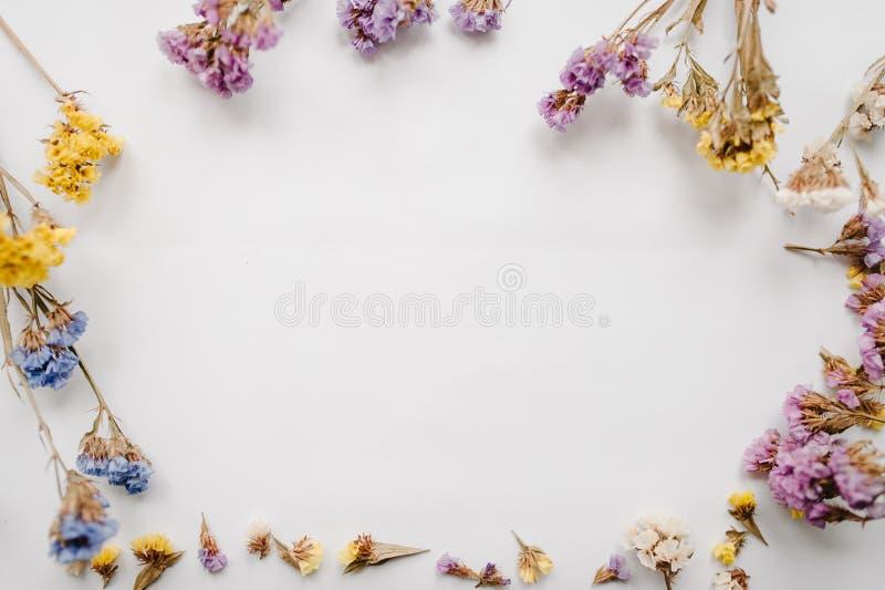 Rama robić wysuszeni barwioni kwiaty na białym tle kosmos kopii kwitnie romantycznego obrazy stock