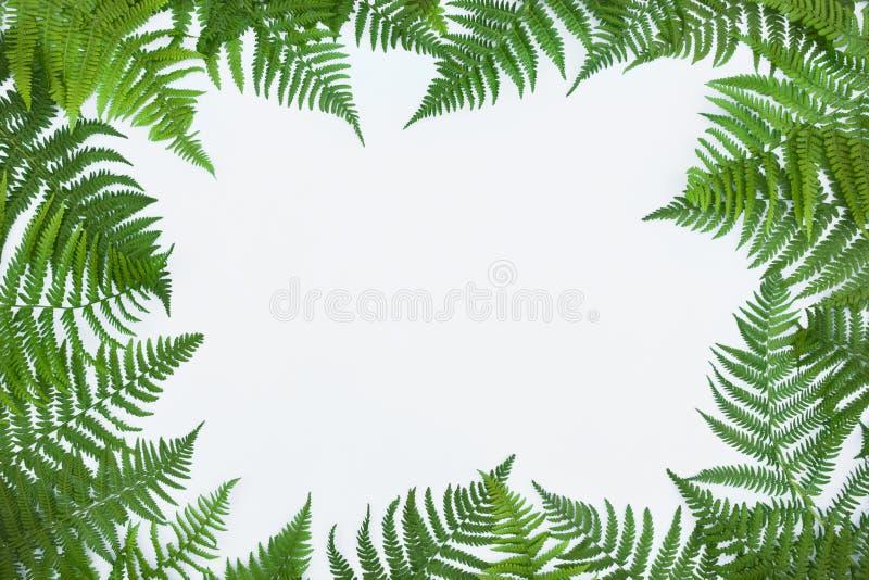 Rama robić zieleni paprociowi liście, palmowy frond na białym tle Abstrakcjonistyczny tropikalny liścia tło, modny kreatywnie pro zdjęcia stock