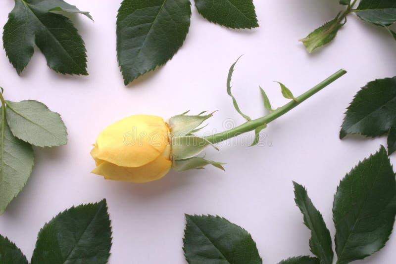 rama rose żółty obrazy royalty free