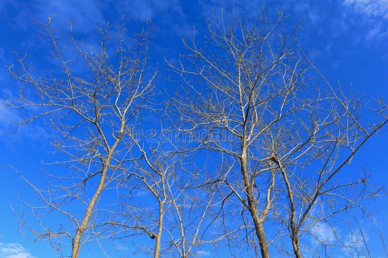 Rama seca del árbol fotografía de archivo